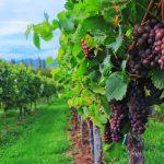 wine-2799719_1920