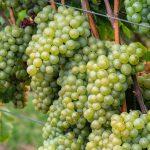 wine-4540478_1920
